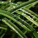 Sparkling Green Summer Rain Jewels by Georgia Mizuleva