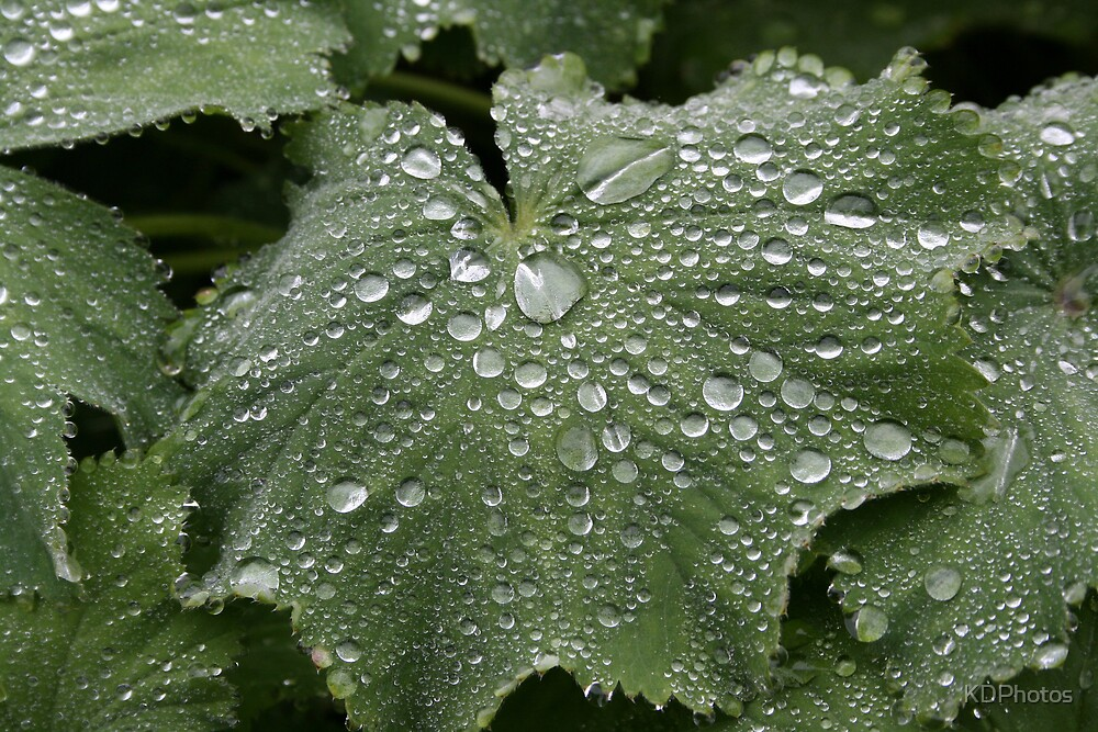 Little drops of water by KDPhotos