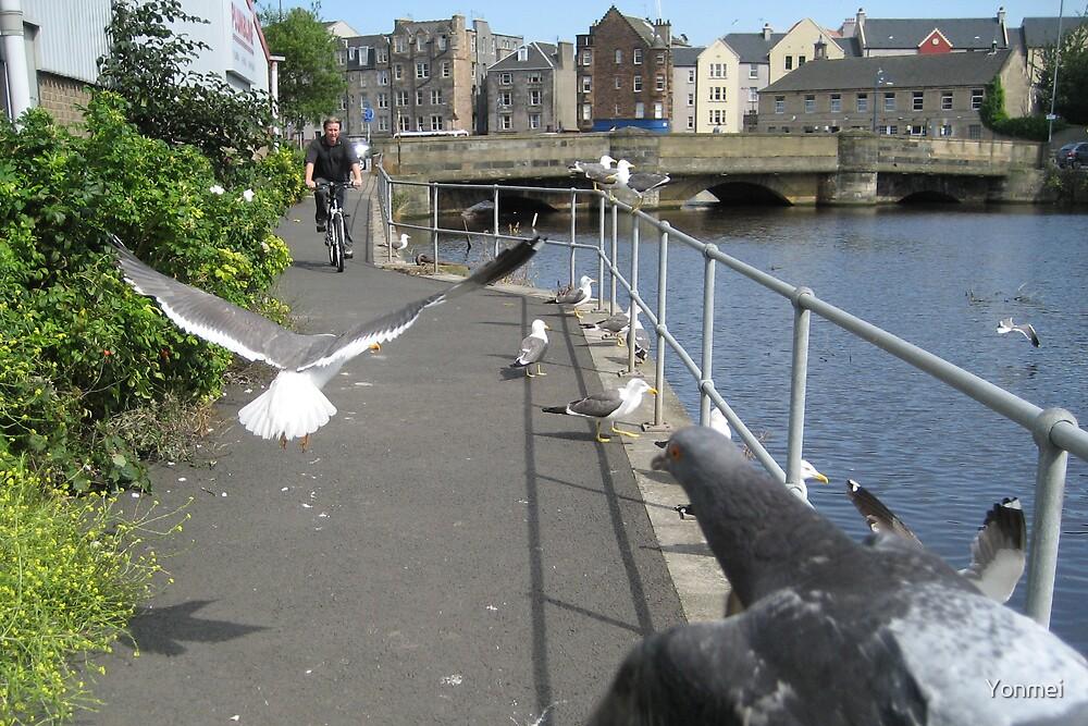 Pigeons Take Flight, 2 by Yonmei