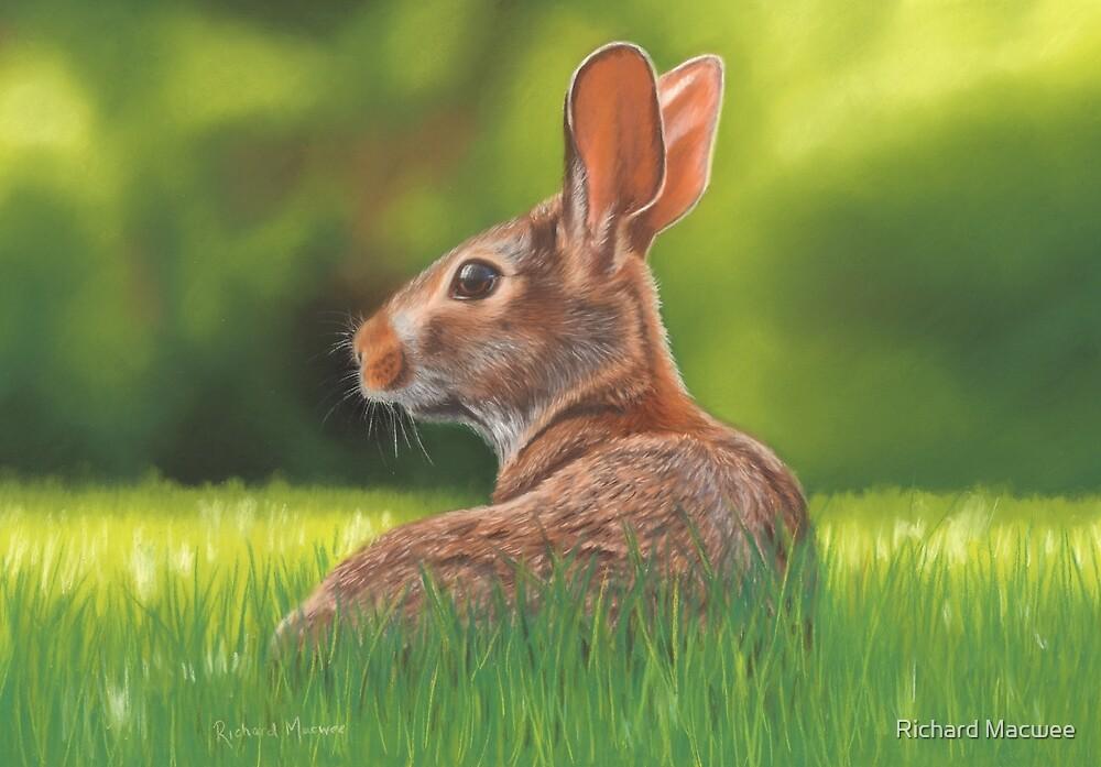 Rabbit by Richard Macwee