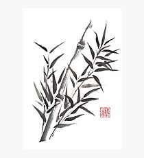 No doubt bamboo sumi-e painting Photographic Print