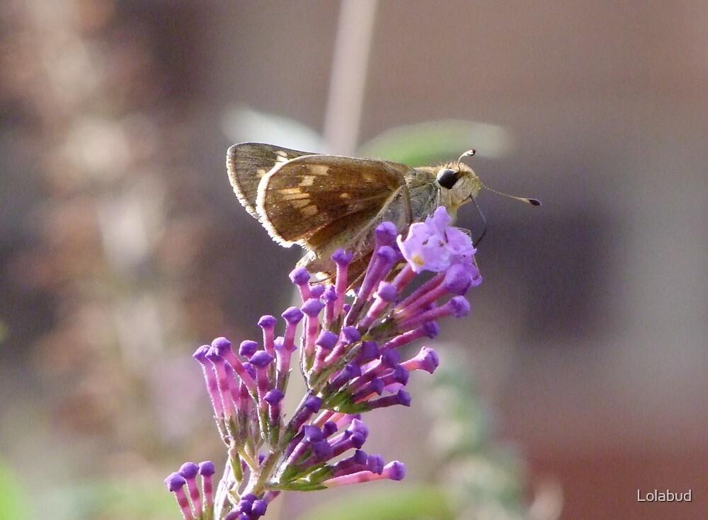 Sweet Nectar by Lolabud