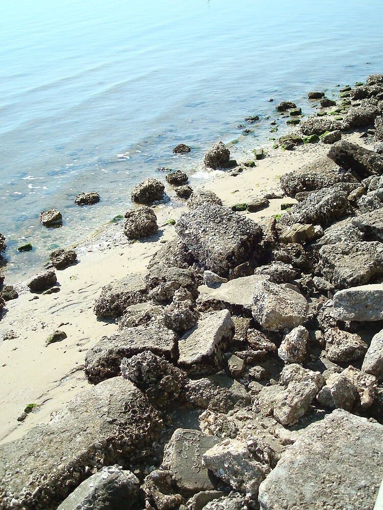 Rocks by Lacelyn