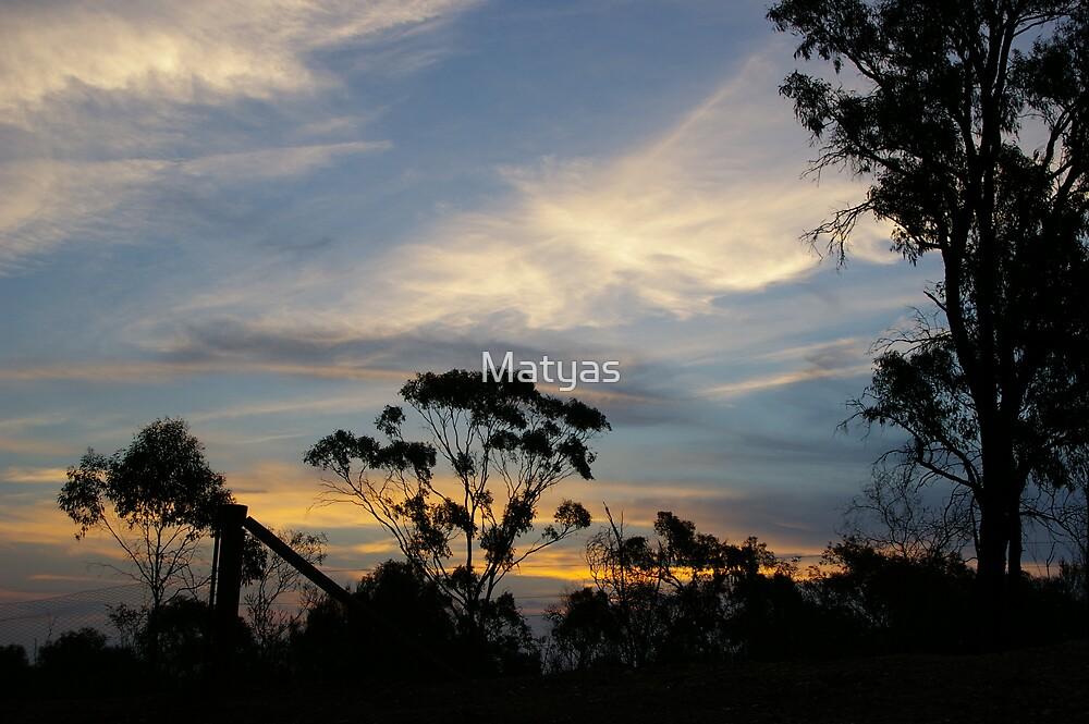 Waning Light in the Bush by Matyas