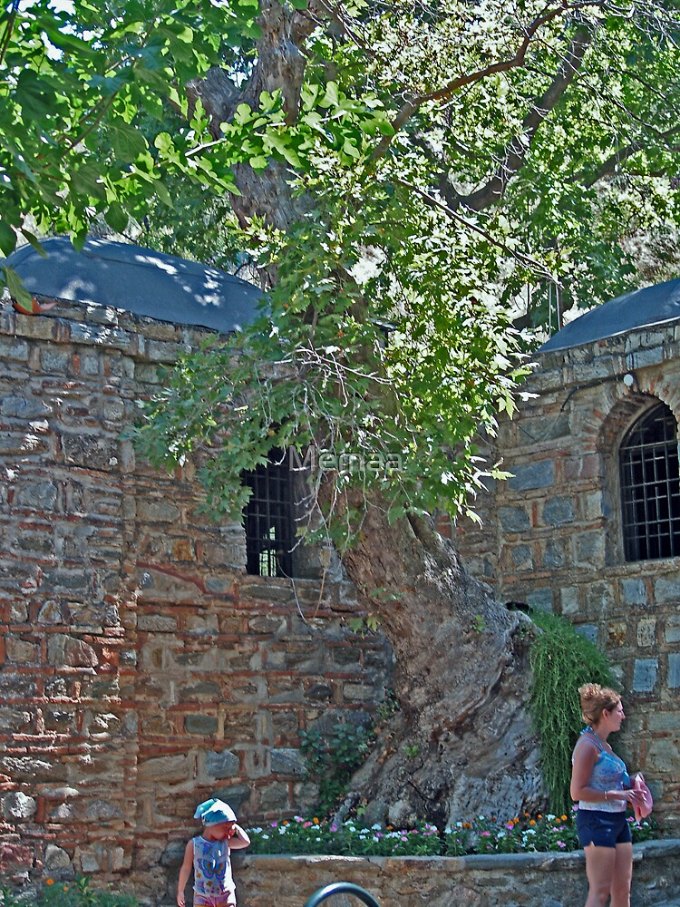 Old Tree at the Virgin Mary's House in Turkey by Memaa