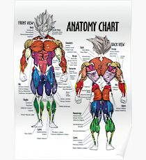 Anatomy Chart Muscle Diagram Poster