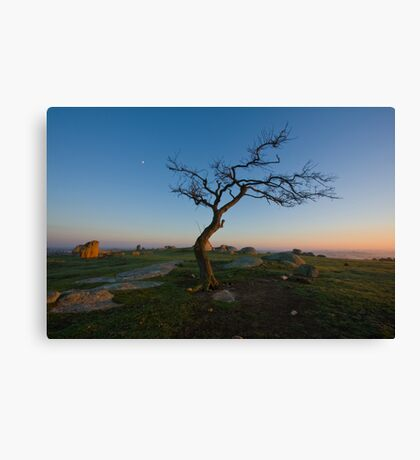 Pride of The Pack Canvas Print