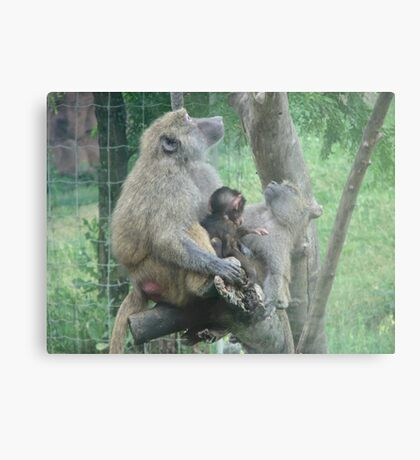 THIS SAYS IT ALL...       TORONTO ZOO Metal Print