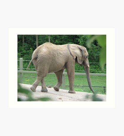 Only 4  1/2 Tons...Toronto Zoo Art Print