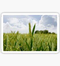 barley crop Sticker