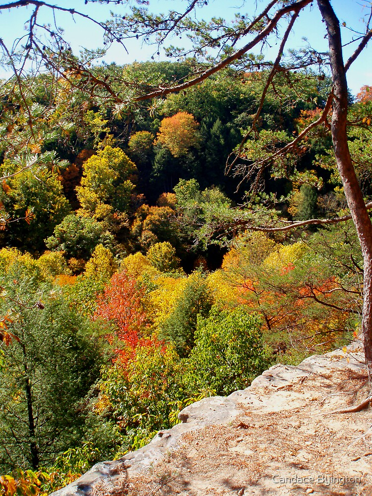 Autumn View from Rim Trail by Candace Byington