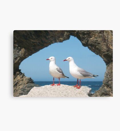 Birds in Australia Canvas Print