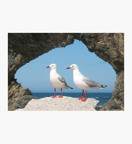 Birds in Australia Photographic Print