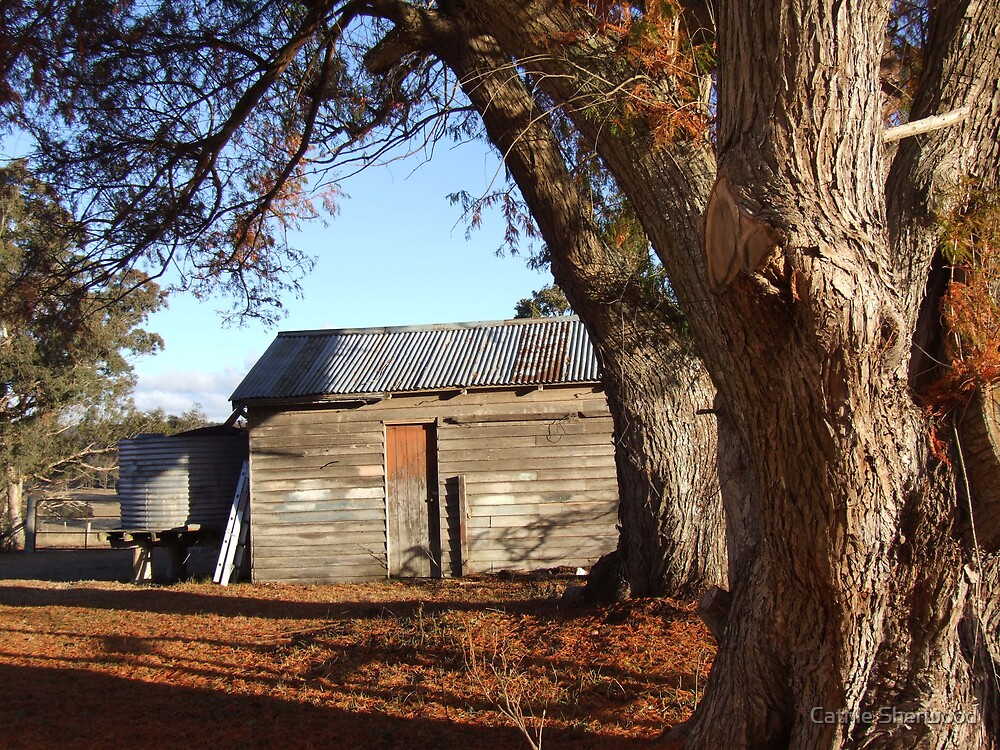 The Trees, The Shed, The Tank by Cathie Sherwood
