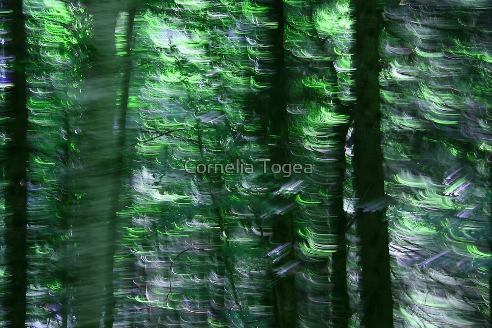 crazy forest by Cornelia Togea