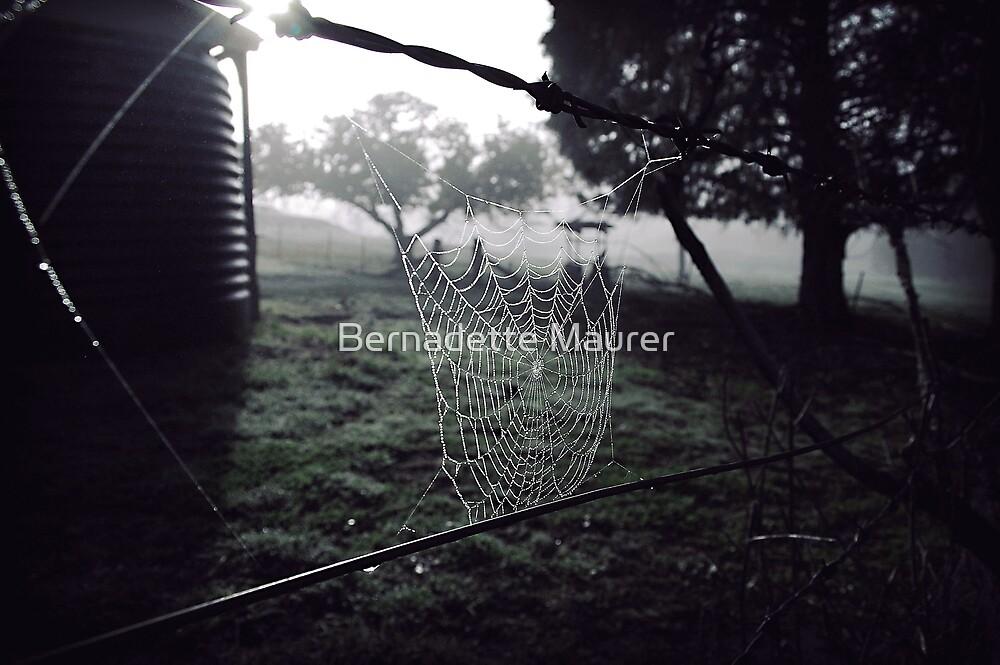 Cobwebs on a winters morning by Bernadette Maurer