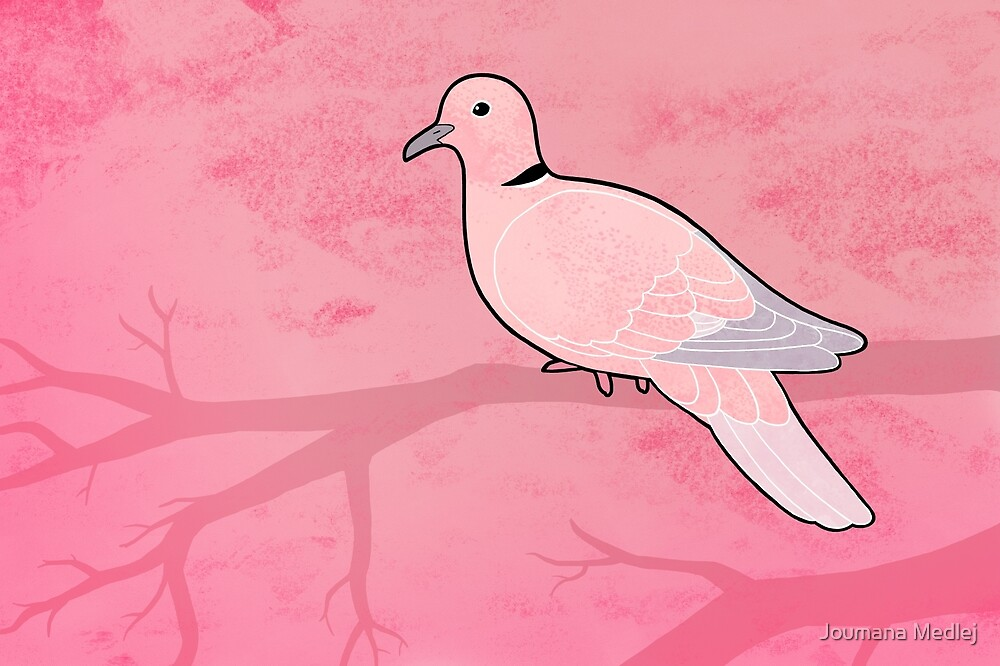 Ring Dove (Streptopelia risoria) by Joumana Medlej