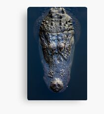 American Alligator floating in water Canvas Print