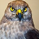 Bird Watch by Lawrence Henderson