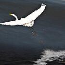 Flight by Lawrence Henderson