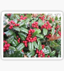 Holly Berries ! Sticker