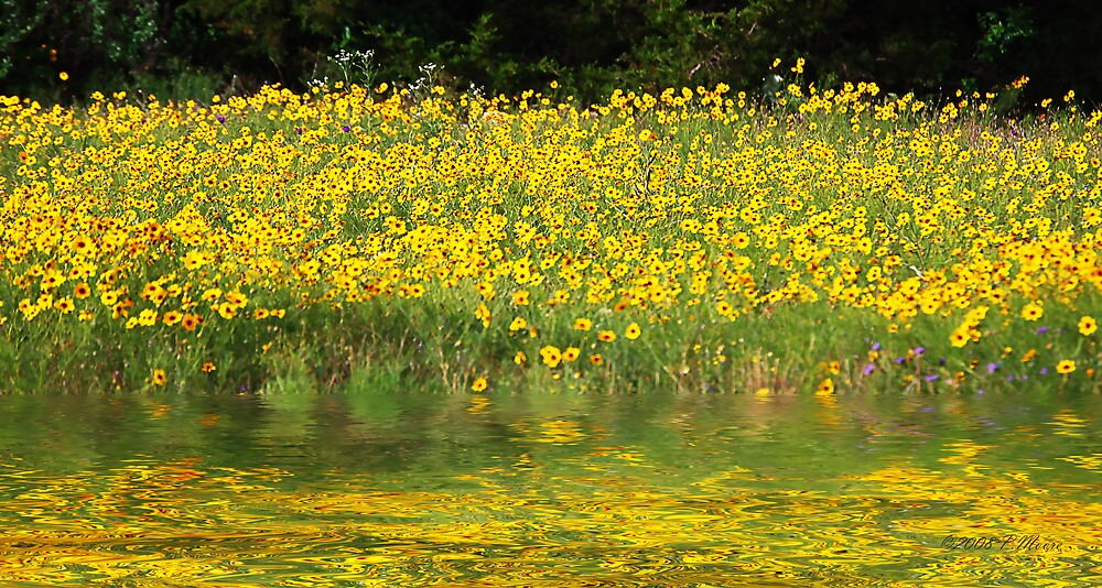 Field of Sunshine by Pat Moore