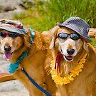 Happy Dogs by Zohar Lindenbaum