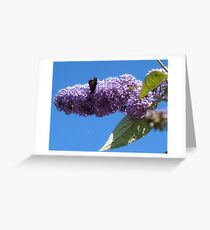 Butterfly on the Buddleja Greeting Card