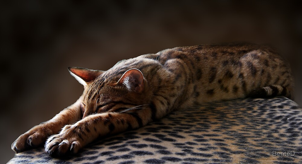 Deep Sleep by BenteD