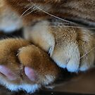 Paws by Bev Woodman