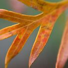 Grevillea Leaf by AnnieD