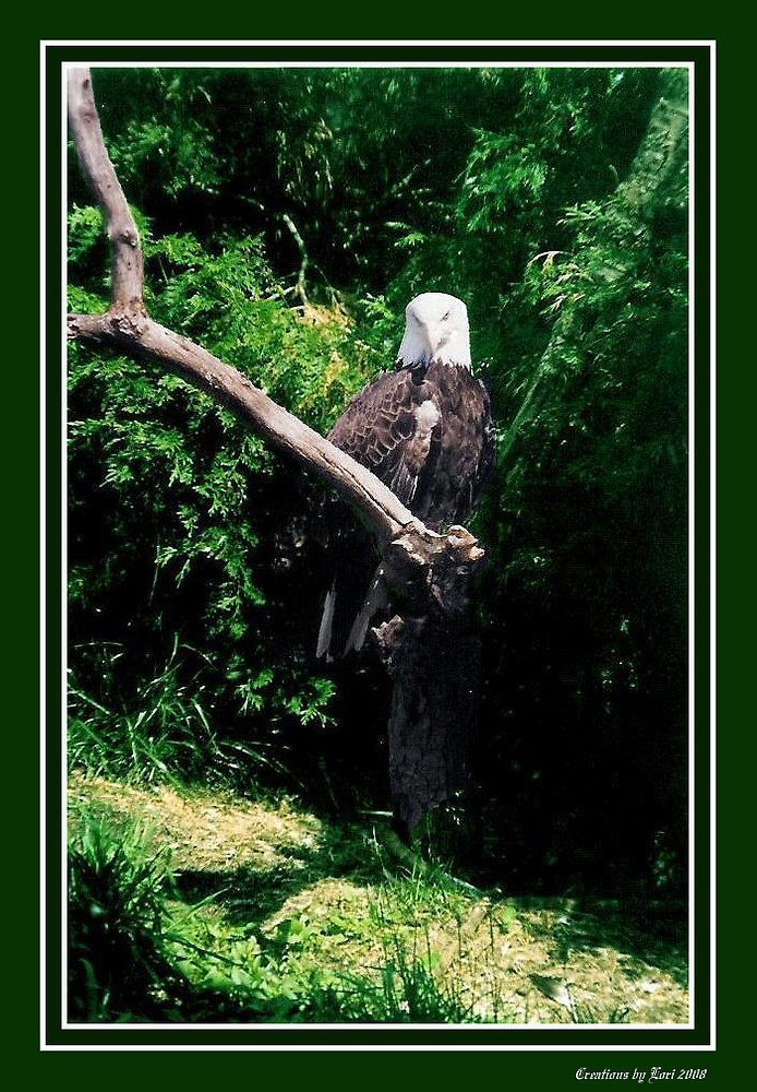 Eagle in a tree by LORI NUNGESTER