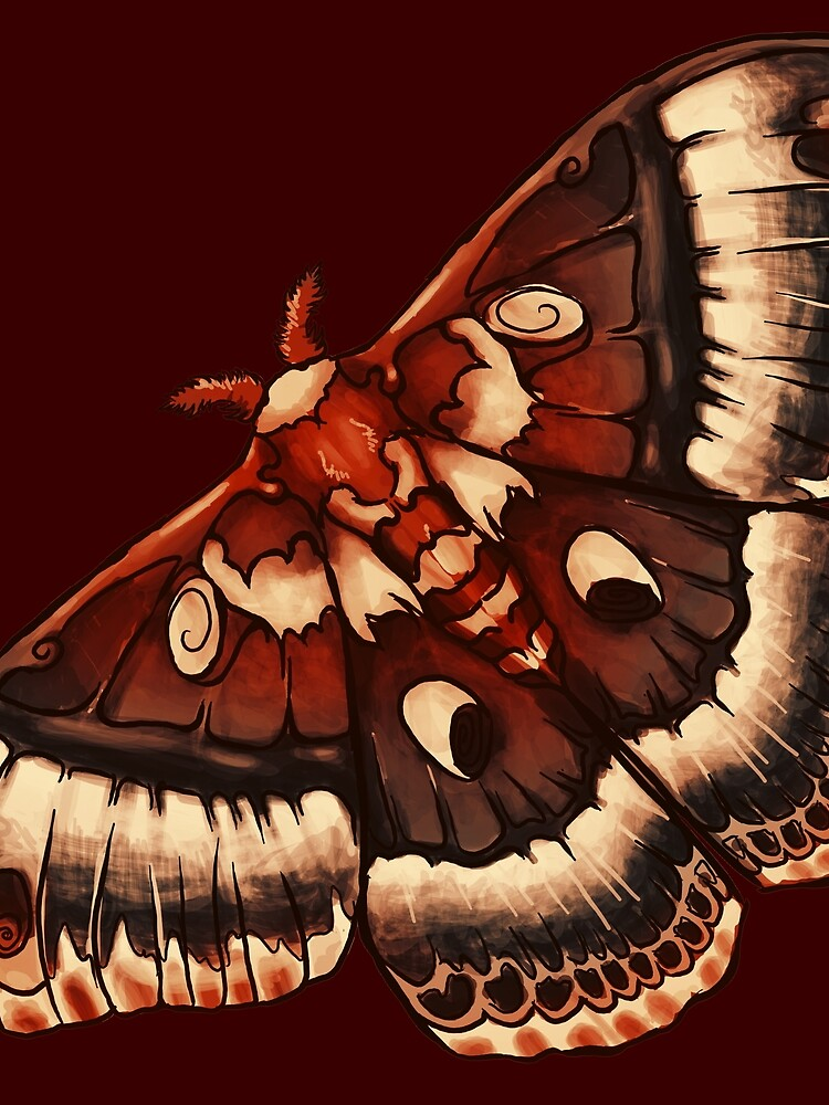 Cecropia Moth by leebradford