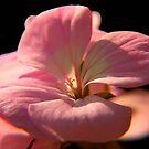 soft pink by SNAPPYDAVE