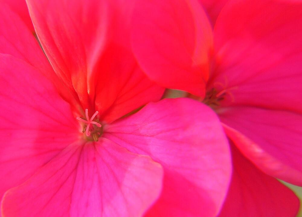 pretty awsome pink by SNAPPYDAVE