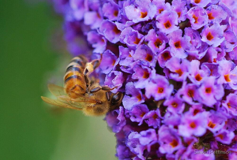 Collecting Pollen by Simon Pattinson