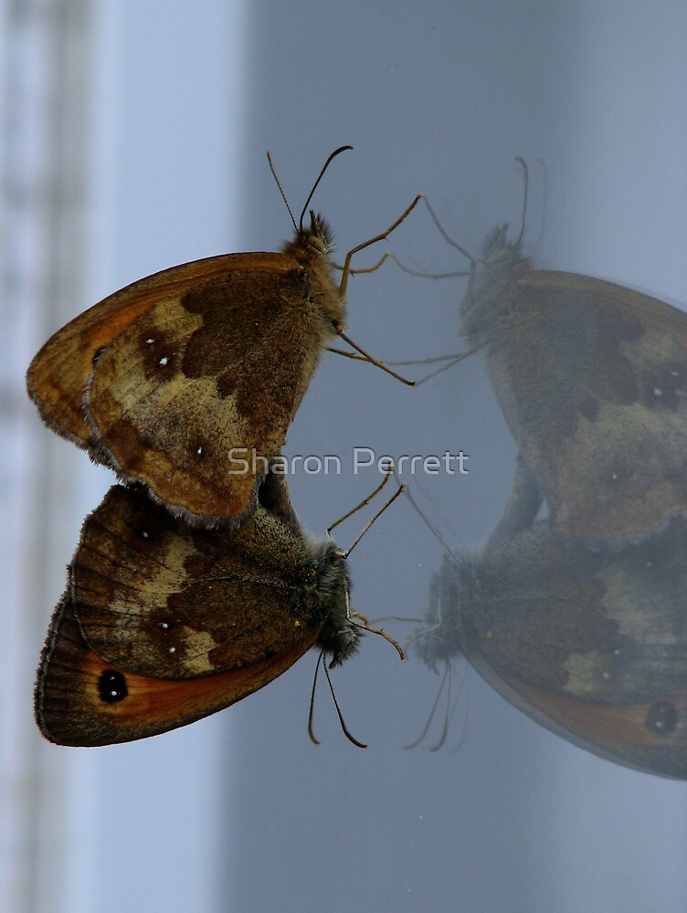 Double Vision by Sharon Perrett
