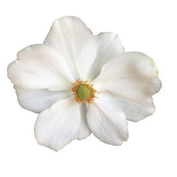Flower 1 by RoxieTheMuller