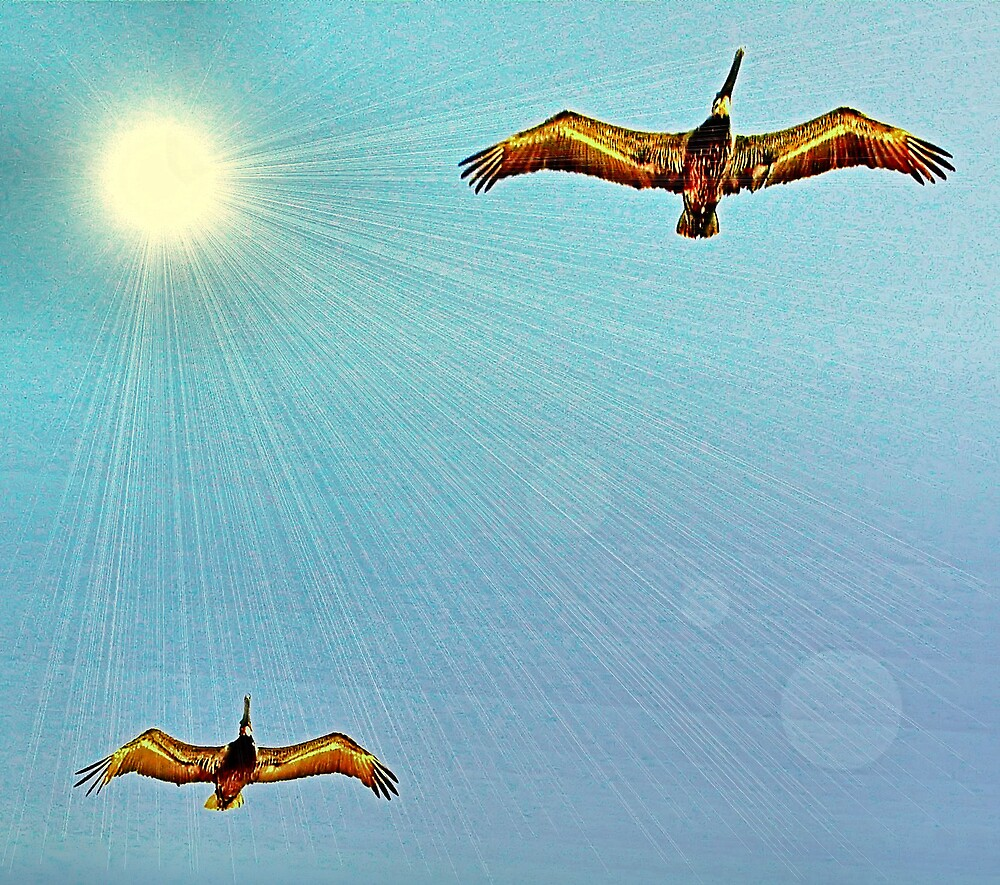 Pelicans On The Wing by TerryDavey