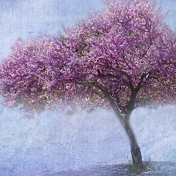 Spring Beauty by EvaMarIza