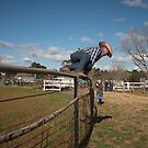 Fence Leaping Cowboy by Clare Colins
