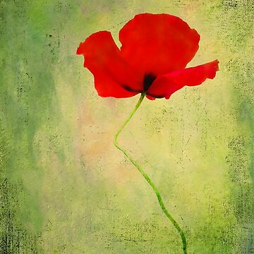"Poppy (from ""Painted flowers"" collection) by EvaMarIza"