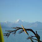 Lake Taupo, New Zealand by Susanne Schmitz