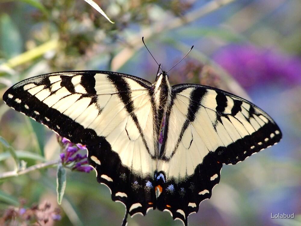 Winged Beauty by Lolabud