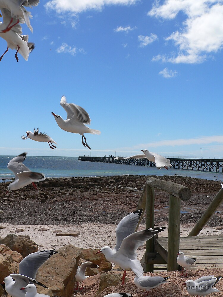 Hungry Gulls by smartprints