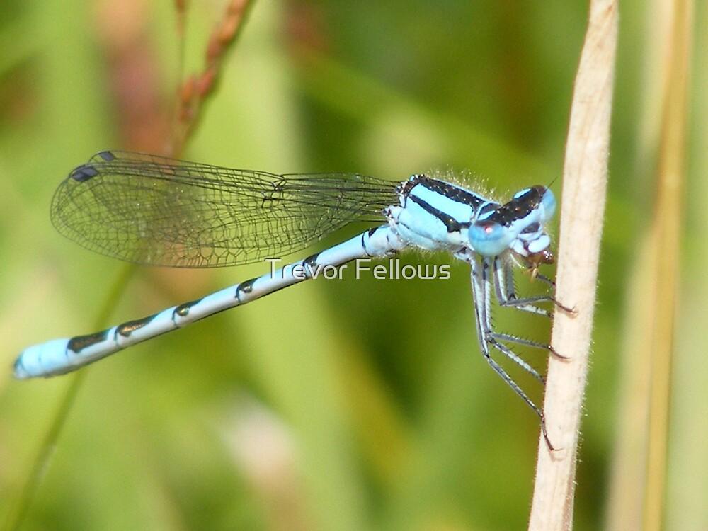 Blue Dragon 2 by Trevor Fellows