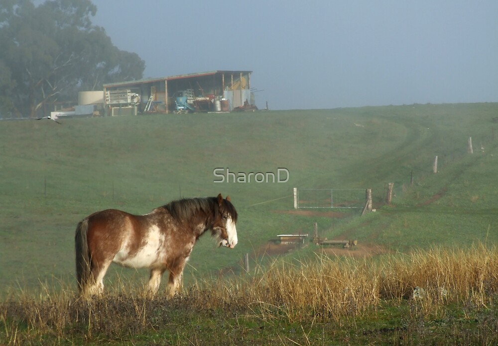 Horse in Fog by SharonD