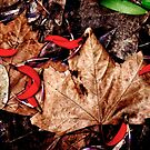 Autumn Leaves by Peter Evans