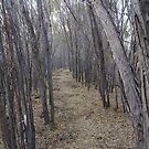 Into the Woods by Phyxius