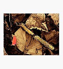 Autumn Leaves 02 Photographic Print